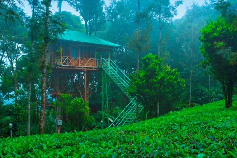 12-tree-house