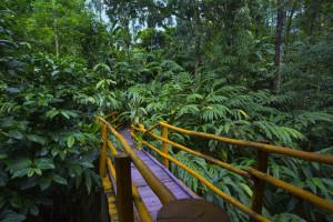 Dreamcatcher-resort-munnar-cardamom-Plantation