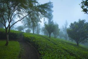 Dreamcatcher-resort-munnar-plantation-view