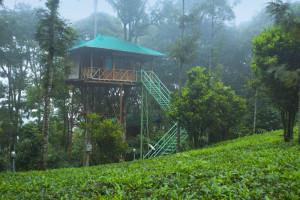 Dreamcatcher-resort-munnar-treehouse