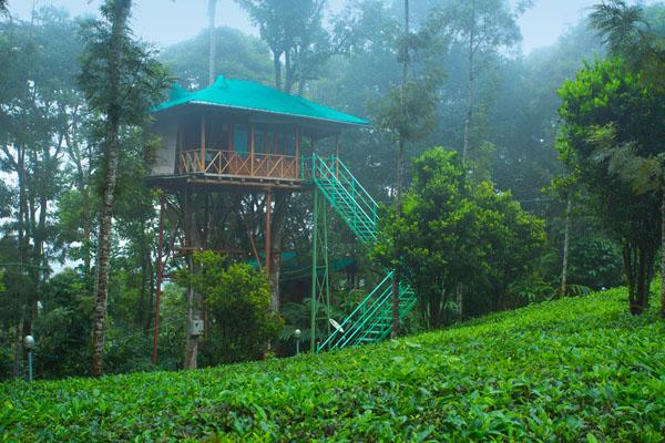 Tree House Dream Catcher Plantation Resort Munnar